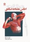 اطلس عضلات اسکلتی